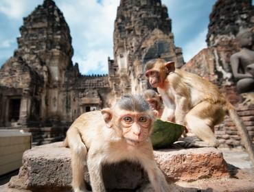 Monkey Temple, Lopburi
