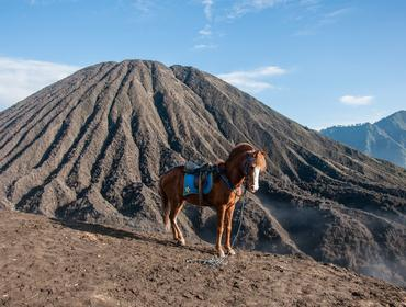 Pony at Mount Bromo crater