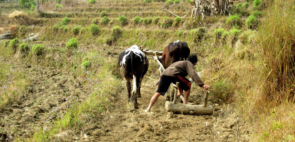 Farming Activities, Pali Ghar