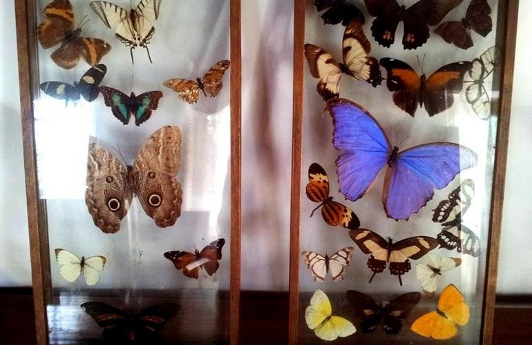 Butterfly collection, Fredy's Bungalow
