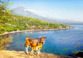 East Bali Discovery by VW Safari