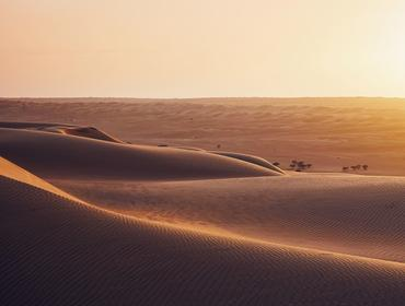 Sand dunes at sunset, Wahiba Sands