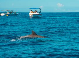 Dolphin spotting, Mauritius
